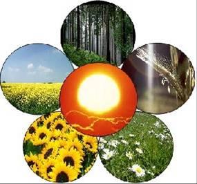 Biomasse-3