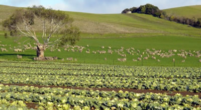 agricoltura_biodinamica_metodo_biodinamico_agricoltura_biodinamica_approccio_biodinamico_agricoltura_biologica_biodinamica_steiner_biodinamico_rudolf_steiner_2