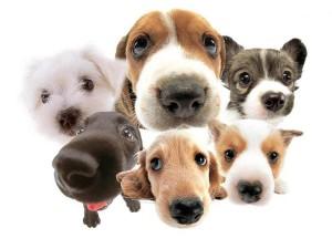 San-Valentino-per-cani-e-gatti-ricco-di-accessori-1024x768
