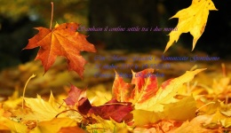 Falling-Leaves-dreamstime