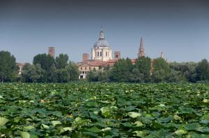 Mantova2018_World Forum on Urban Forests_2